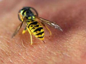 Azərbaycanda arı 55 yaşlı kişini öldürdü