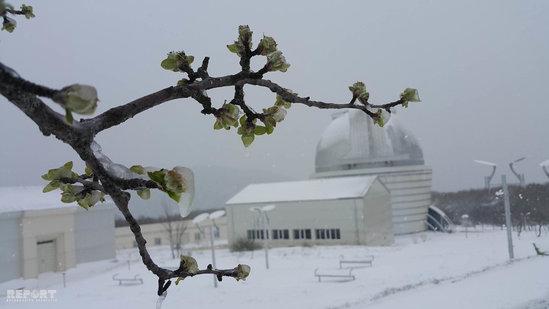 Şamaxıya qar yağıb, yollar buz bağlayacaq – Fotolar