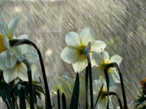 Dolu düşəcək, intensiv yağış yağacaq: Sabahın havası