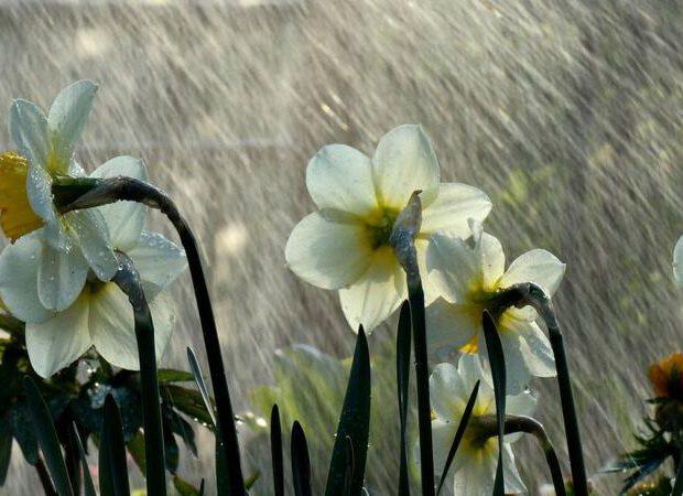 Sabahın hava proqnozu: Şimşək çaxacaq, yağış yağacaq, dolu düşəcək