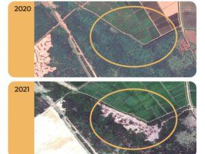 В разгар войны в Карабахе лес в Ленкорани продали за 26 манатов
