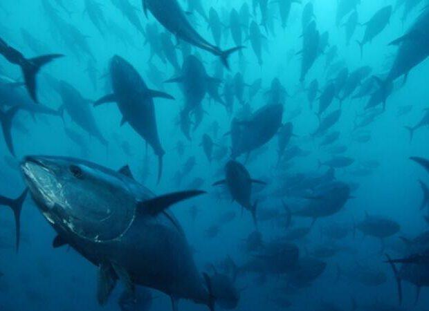 Xəzər dənizində balıq ehtiyatları yüz dəfələrlə azalıb