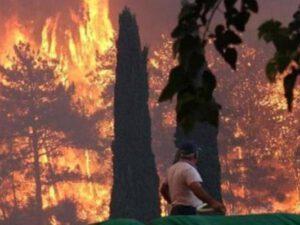 Antalyada meşəni yandıran 16 yaşlı yeniyetmə həbs edildi