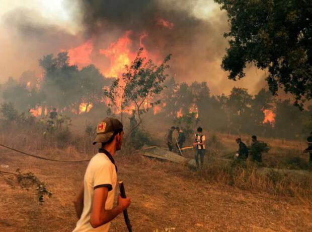 DƏHŞƏT: Tanınmış sənətçi meşə yanğınlarını törətməkdə ittiham olundu – Yandırılaraq öldürüldü / FOTO
